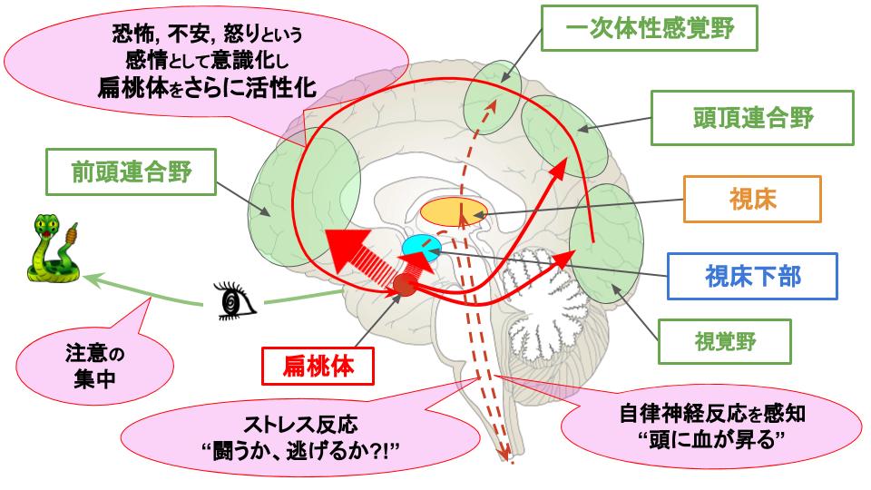 脳と心★記憶に自信がありますか★   認知症高齢者研究所